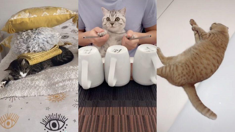 10 lustige Katzenvideos (#1)